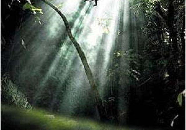 Crítica: Amazônia 3D
