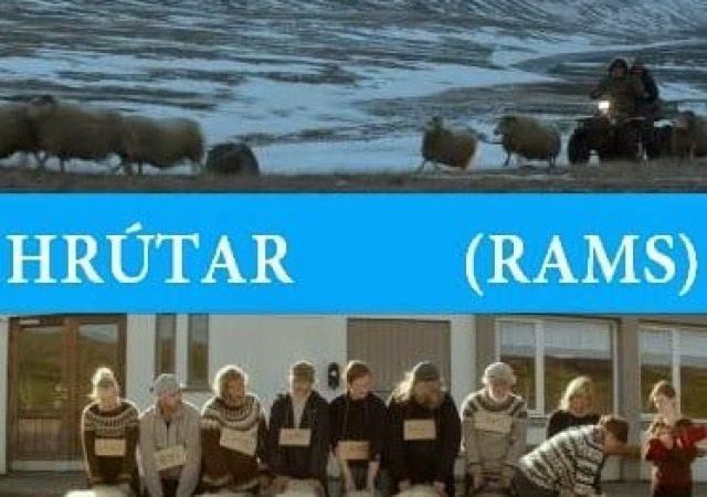 Crítica: Hrútar (Rams)