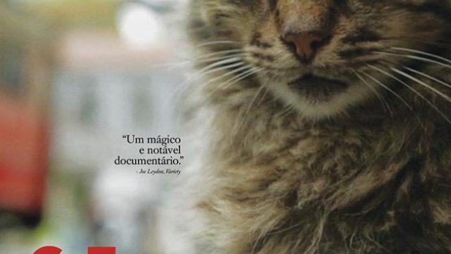 Crítica: Gatos