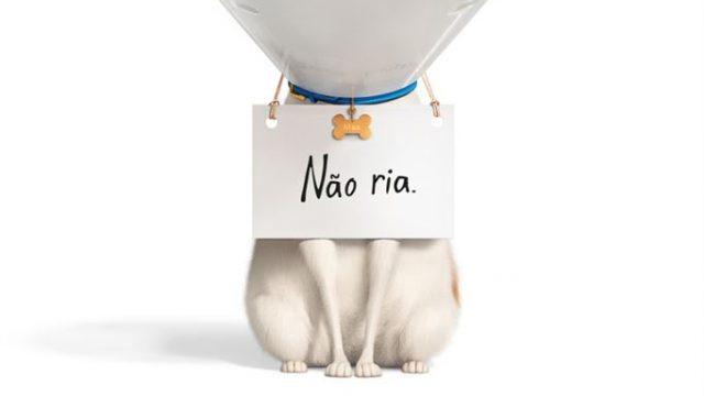 Pets – A Vida Secreta dos Bichos 2 | Crítica
